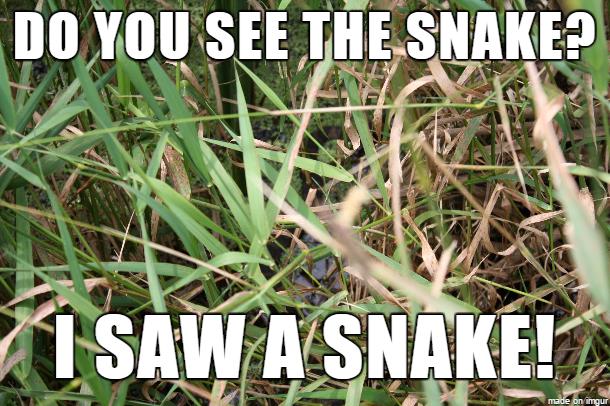Snakememe